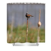 Reed Bunting Singing In Springtime Shower Curtain