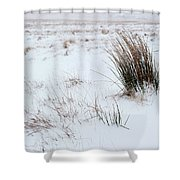 Reeds And Snow Shower Curtain
