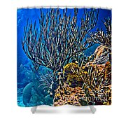 Reef Dive Shower Curtain