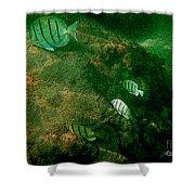 Reef Life Off Hawaii Shower Curtain