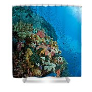 Reef Scene With Corals And Fish Shower Curtain