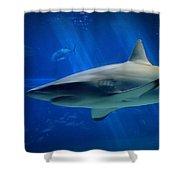 Reef Shark Shower Curtain
