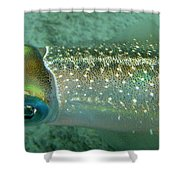 Reef Squid Shower Curtain