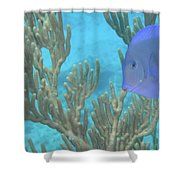 Reef Tang Shower Curtain