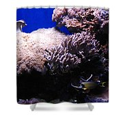 Reef Tank Shower Curtain