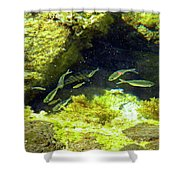 Reef Tide Pool Shower Curtain