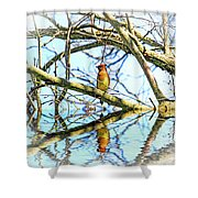Refection Of Cedar Waxwing Shower Curtain