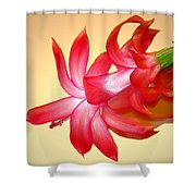 Refined Elegance 4 Shower Curtain