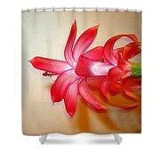 Refined Elegance Shower Curtain