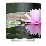 Reflected Water Lily Shower Curtain
