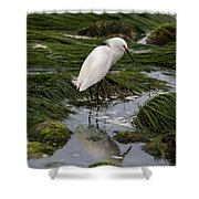 Reflecting At The Tide Pool Shower Curtain
