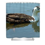 Reflecting Duck Shower Curtain