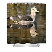 Young Gull Reflections Shower Curtain