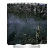 Reflecting Reeds Shower Curtain