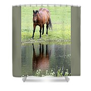 Reflecting Horse Near Water Shower Curtain