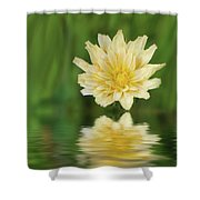 Reflection In Yellow Shower Curtain
