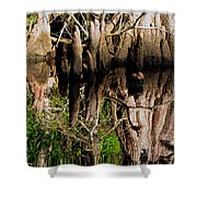 Reflection Of Cypress Knees Shower Curtain