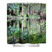 Reflection Of Cypress Trees Shower Curtain