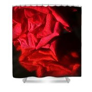 Reflection Of Red Roses Shower Curtain