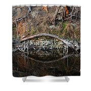 Reflections Iguana Shower Curtain