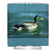 Reflections From A Mallard In Omaha Shower Curtain