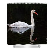 Reflections Of A Swimming Swan Shower Curtain