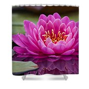 Reflections Of A Waterlily Shower Curtain