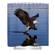 Reflections Of Eagle Shower Curtain by John Hyde - Printscapes