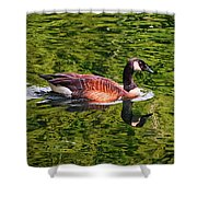 Reflections - Swimming Goose 003 Shower Curtain