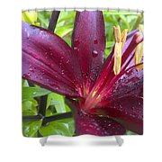 Refreshed Shower Curtain