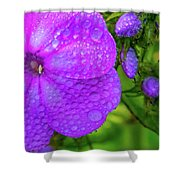 Refreshed Phlox 2 Shower Curtain