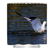 Refreshing Dip Shower Curtain by Amanda Struz