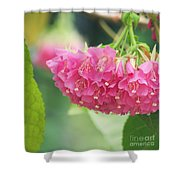 Refreshingly Pink Shower Curtain