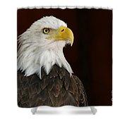 Regal Bald Eagle Shower Curtain by Sue Harper