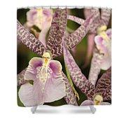 Regal Orchids Shower Curtain