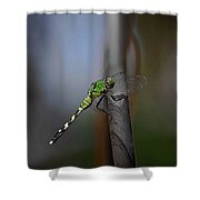Regal Shadows Shower Curtain by DigiArt Diaries by Vicky B Fuller