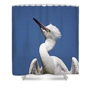 Regal Snowy Egret Shower Curtain