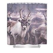 Reindeers Shower Curtain