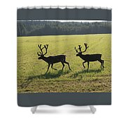 Reindeers On Swedish Fjeld Shower Curtain
