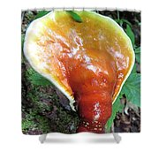 Reishi Sprout Shower Curtain