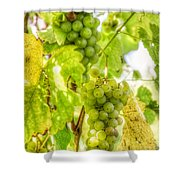 Riesling Harvest IIi Shower Curtain