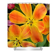 Relaxed Tulips Shower Curtain