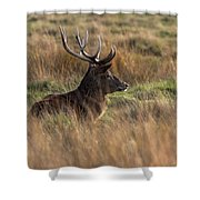 Relaxing Deer Shower Curtain