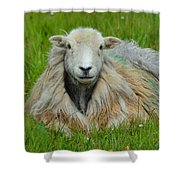 Relaxing In The Pasture Shower Curtain