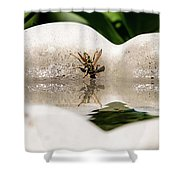 Reflected Little Stinger Taking A Sip By Chris White Shower Curtain