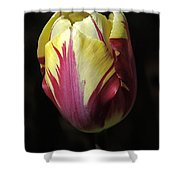 Rembrandt Tulip Close Up Shower Curtain