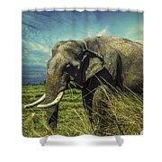 Remember Elephant Shower Curtain