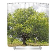Remember The Trees Shower Curtain