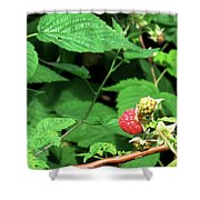 Remembering One Sweet Rasberry Shower Curtain