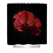 Remembrance Poppy 1 Shower Curtain